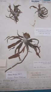 Cambridge University Herbarium