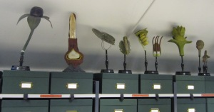 Plant models at the Manchester Museum Herbarium