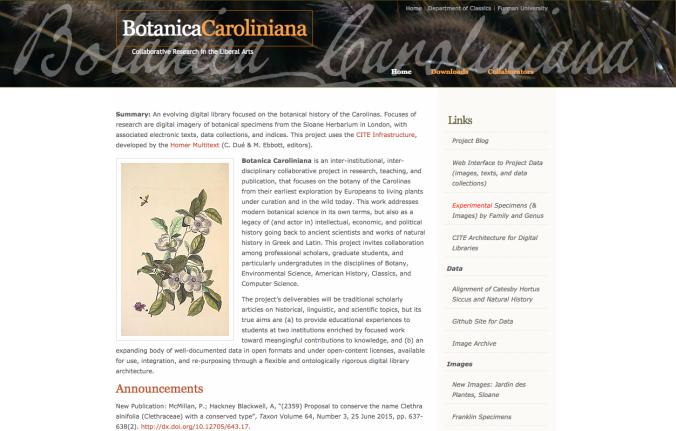 3-caroliniana
