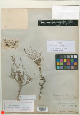 Virtual Herbarium Image - LAPI Scan