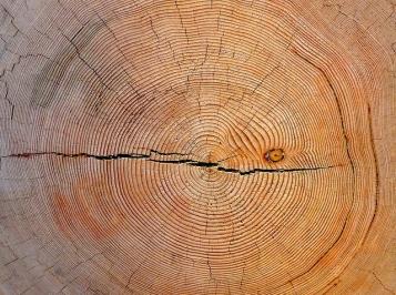 Tree Rings Art Poskanzer