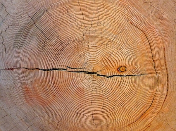 Tree Rings Art Poskanzer
