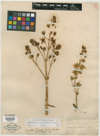 Virtual Herbarium Image - LAPI Scan