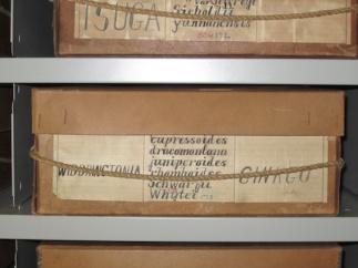 Henry specimen box sm