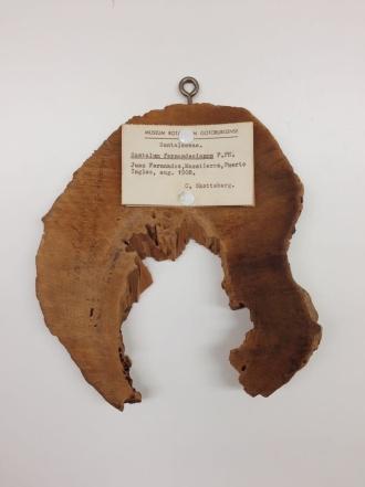 1b Santalum wood