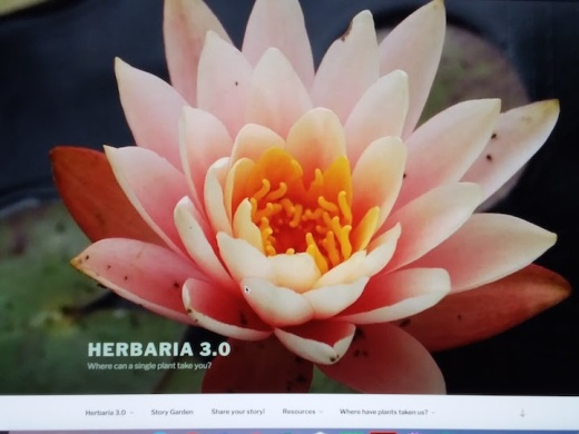 4 Herbaria 3