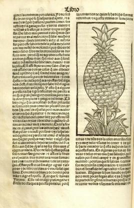 1 Pineapple Oviedo