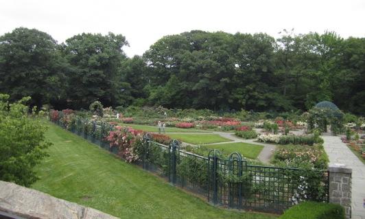 1 NYBG Rose Garden