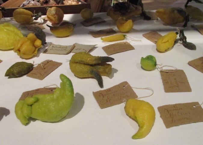 3b Loudon Lemons