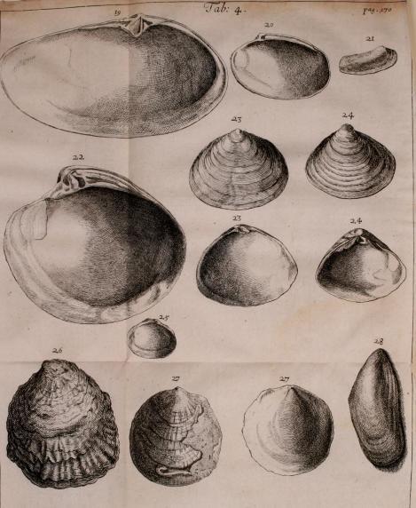 2 Lister shells